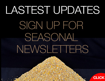 SESONAL NEWSLETTERS