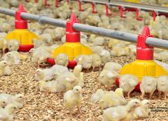 Towards Better Feeding of Captive Birds